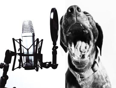 Attention, Listen Up, Dog Talk